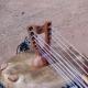 Miniatura kamele n'goni 12 cuerdas