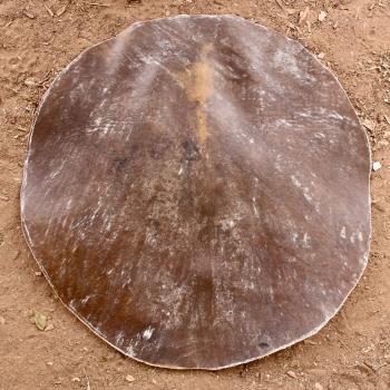 Peau de vache traitée pour kora