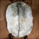 Sale male goat skins for djembe. Buy thick skins