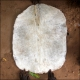 Online sale of goatskin of medium thickness. Buy djembe skin