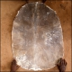 Online sale of goatskin of medium thickness. Buy djembe skin
