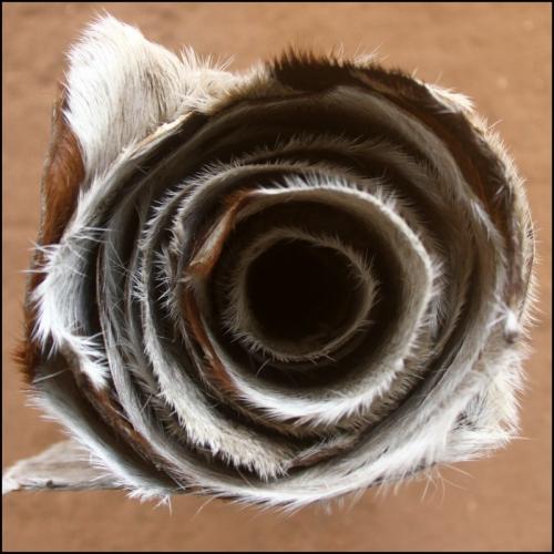 Lot de 10 peaux de chèvre d'épaisseur moyenne pour djembé.